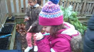 south harringay winter gardening in the infants
