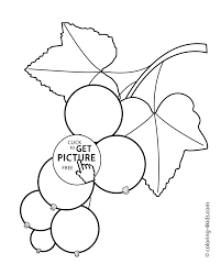 currants fruits and berries coloring pages for kids printable free