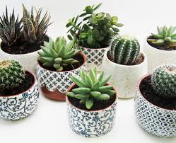 Plant Potters by Susan Simonini