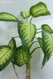 house plants identify by pic plant identification mxc picture