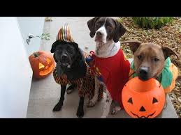 Dogs Halloween Costumes Cats Dogs Wearing Halloween Costumes Funny Cute Animal
