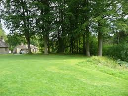 free images tree nature grass lawn meadow view country