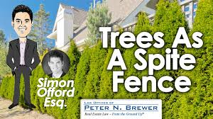 trees qualify as a spite fence neighbor dispute over line of