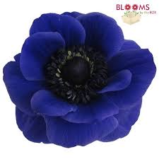 anemones flowers blue anemone flowers wholesale bloomsbythebox