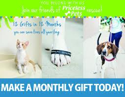 priceless pet rescue a no kill pet rescue