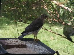 glassblower info backyard birds holland bucks county