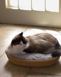 Window Sill Cat Bed Cat Bed U0026 Video Martha Stewart