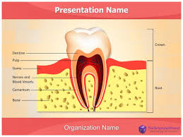 dental templates for powerpoint free download dental anatomy powerpoint presentation template thetemplatewizard