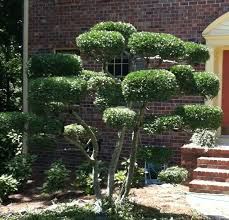 10 best small trees images on garden trees small