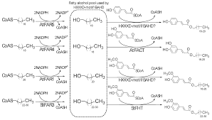 plants free full text occurrence and biosynthesis of alkyl