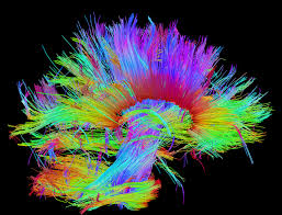 Human Brain Mapping Pic Of The Day Human Brain Connections Map Ua Magazine