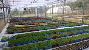 serre horticole en verre accueil le sulhouët