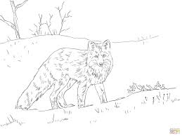 red fox coloring pages cute fennec fox walks coloring page free