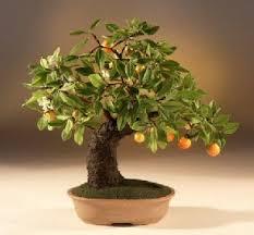 artificial orange bonsai tree