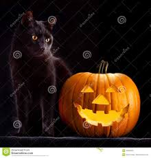 picture of halloween cats halloween stock photos images u0026 pictures 224 694 images