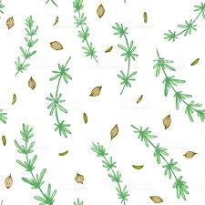 kitchen herbs seamless colored pattern with hand drawn herbs rozemarine and