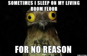 Potoo Bird Meme - th id oip tradbiqebgim4skhartbqghaex