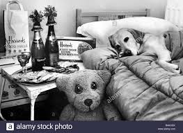 animals dogs pets dog in bed with bedside table of goodies at dog
