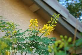 All Year Flowering Shrubs - flowering all year long ramblings from a desert garden