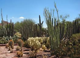 Phx Botanical Garden Top 15 Extraordinary Things You Can Do In Right Now Trip101