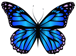 blue butterfly png clipar image pinteres