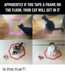 Meme Tape - apparently if you tape a frame on the floor your cat will get in it