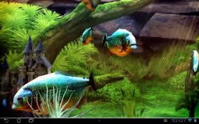halloween fish tank background piranha aquarium 3d lwp android apps on google play
