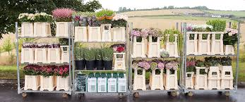 wholesale flowers master flowers wholesale flowers plants and sundries