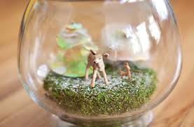 smile and wave home for the holidays janae hardy u0027s terrarium diy