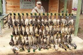 Mallards Duck Blind Duck Hunts At Alabama Mallard Duck Hunting Lodge