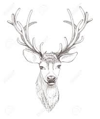 25117807 deer head isolated beautiful sketch illustration stock