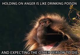 Baboon Meme - zen master gelada baboon on anger poison