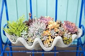 planter for succulents best pots for succulents succulents in planter succulents pots