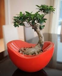 indoor office plants for good office environment office architect