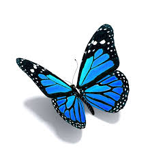 blue butterfly qygjxz