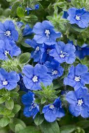 37 best drought tolerant plants images on pinterest flower