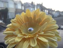 Beetle Flower Vase Short Stemmed 13cm Gerbera Flower With Pearl Centre Ideal For Vw