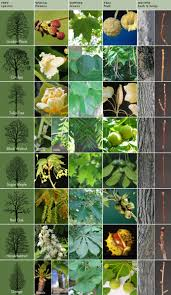 Trees And Their Meanings by How Can Leaves Identify A Tree Phenology Science With Grambo