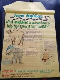 animal worksheet new 582 animal adaptations worksheets 4th grade