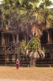cambodian in traditional dress by a palm tree at angkor