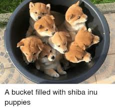 Shiba Meme - a bucket filled with shiba inu puppies dank meme on