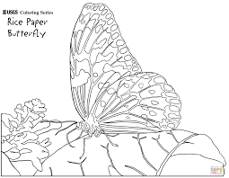 color page butterfly best butterfly coloring pages with color