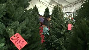 christmas trees in high demand post thanksgiving khon2