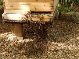 backyard beekeeping my gardener says u2026