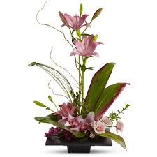 cymbidium orchids imagination blooms w cymbidium orchids in point pleasant nj