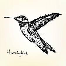 hummingbird sketch stock images image 34438394