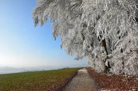 free photo landscape winter snow wide hoarfrost field tree max pixel