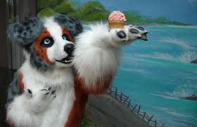 d b australian shepherds the fursuit database