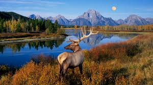 free deer wallpaper background pc wallpapers that are beautiful