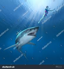 great white shark closes on unsuspecting stock illustration
